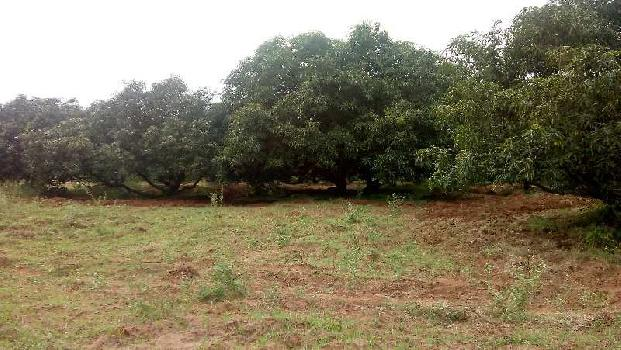 Mangogarden
