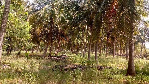 Coconut farm,mangofarm