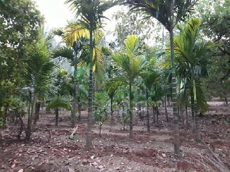 Kudal goveri agricultural land