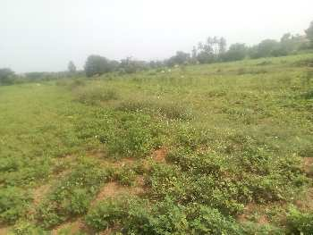 Agricultural/Farm Land for Sale in Anekal, Bangalore