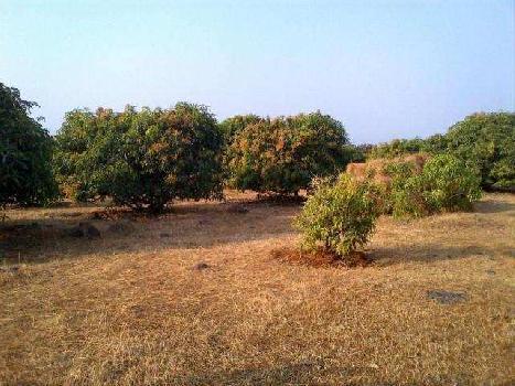 AGRICULTURAL FARM LAND FOR SALE CLOSE NEAR TO MULA DAM