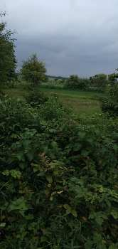 46 Guntha Agricultural/Farm Land for Sale in Saralgaon, Thane