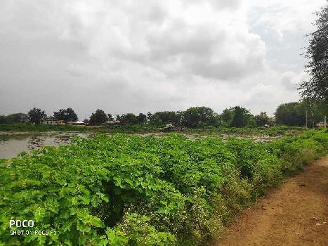25 Acre Agriculture Plot For Sales At Chatuwa, Near Simga, NH30 To Berla, Bemetara, Raipur Capital OF Chhattisgarh India.
