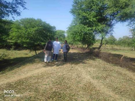 52 Acre Agriculture Plot For Sale At NH30 / NH200 To Saddu, Sungera, Tilda, Raipur, Chhattisgarh.