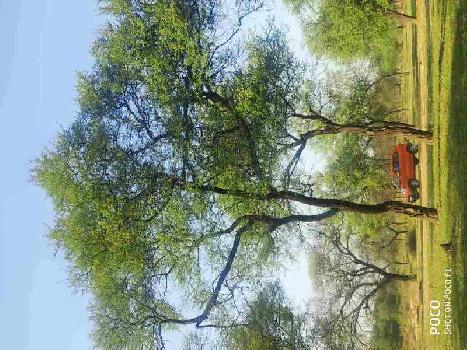 52 Acre Agriculture Plot For Sale At NH30 / NH200 To Saddu, Sungera, Tilda, Raipur, Chhattisgarh.