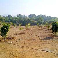1 Acre Fully Developed Farmhouse For Sale in Pune.