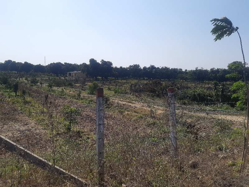 Plot For Sell in Gujrat-Daman Border