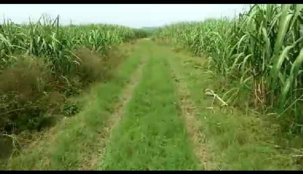 Agricultural/Farm Land for Sale in Doiwala, Dehradun