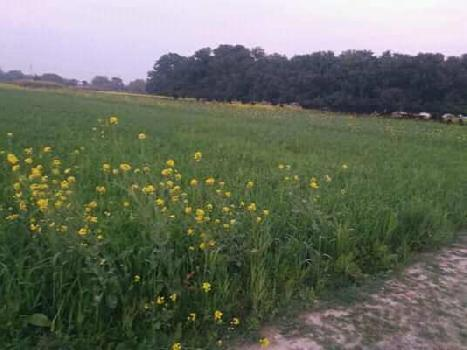 Agriculture Land For Sale In Baburi, Chandauli. Near Bauri Village Mughalsarai