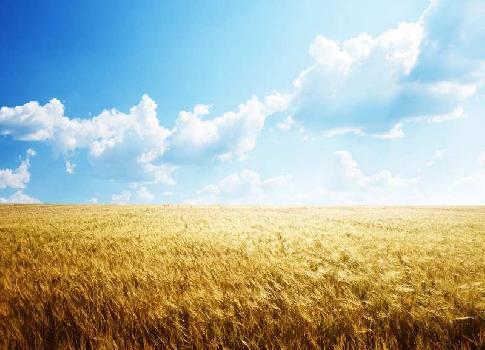 Agriculture Land For Sale In Chakiya, Chandauli. Near Lewa Marg