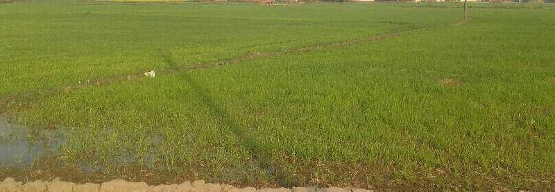 Agriculture Land For Sale In St. John's School, Katsila, Chandauli. Near Highway