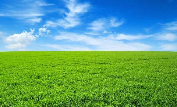 Agriculture Land For Sale In Khagwal Village, Chandauli