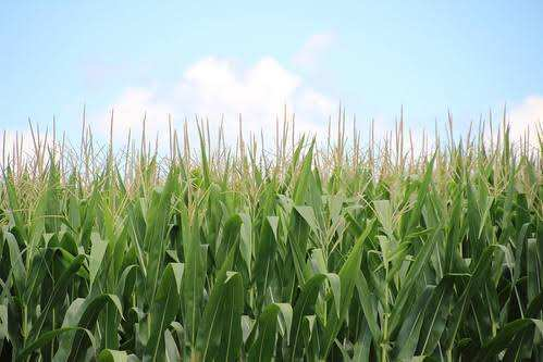 Agriculture farm garh tasil best farming for sale