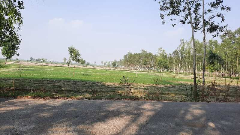 Agriculture land in bright