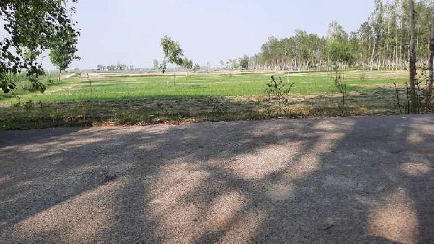Garhmukteshwar tehsil agriculture land in bright