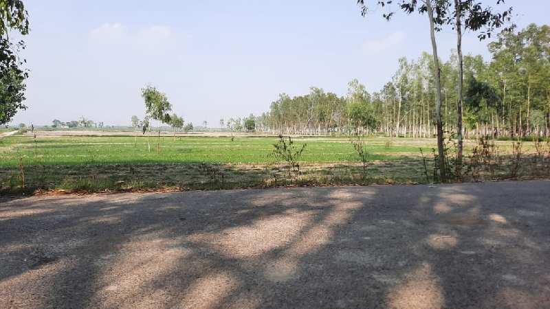 Brijghat agriculture land tahsil garhmukteshwar