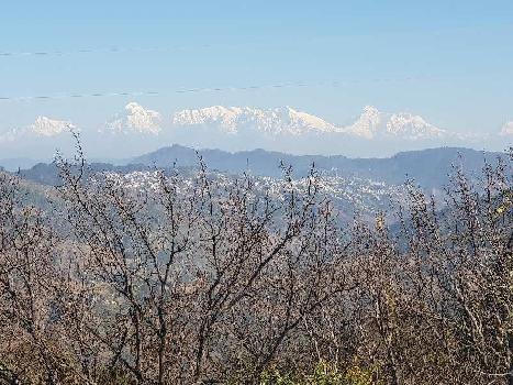 Residential Land For Sale In Kaphura Village, Nainital Uttarakhand. Near Sitla Mukteshwar