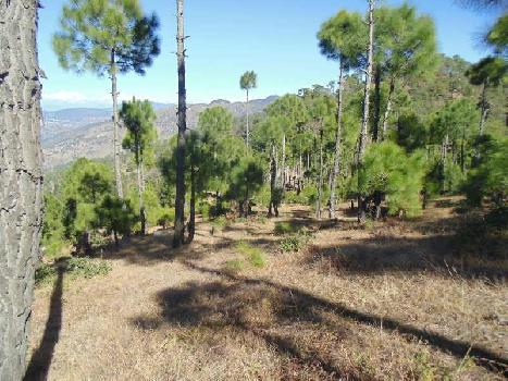 Residential Land For Sale In Satoli Village Sonapani, Sitla, Mukteshwar, Uttarakhand