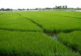 8 Acres Agriculture Land Sale in Handesra, Mohali