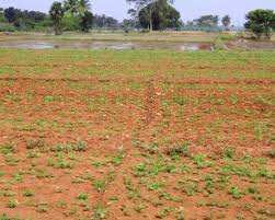 Agriculture Land For Sale In Ram Nagar, Sonipat