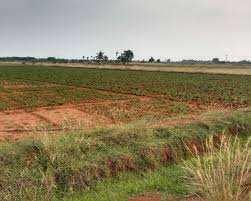 Agriculture Land For Sale In Jhundpur, Sonipat.