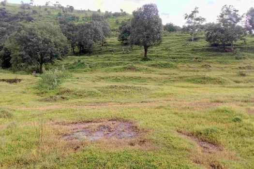 16000 Sq.ft. Residential Plot for Sale in Mahalunge, Pune