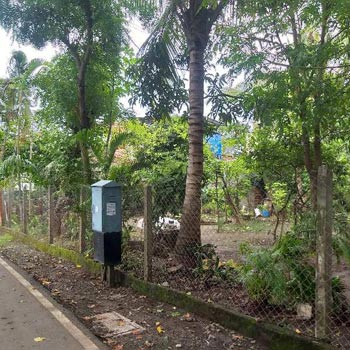 6.25 Ghunta Residential N.A Plot for Sell at Moti Daman