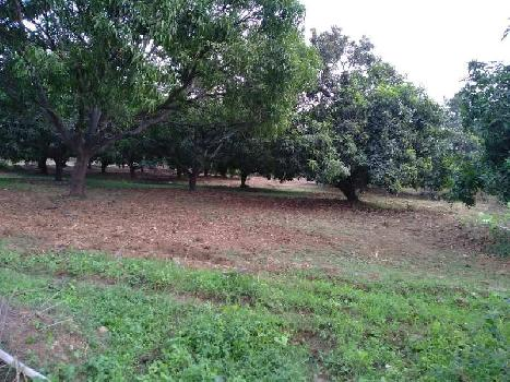 11 Acre Full Develop Wadi Farm House for Sell at Bordi