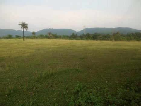 60 Acre Agricultural Land Title Clear at Nargol Umbergoan