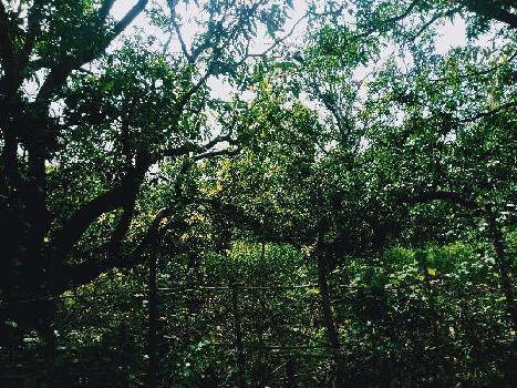 25 Acre Farm Land Available for Sell Near Studia Umbergoan