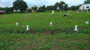 Residential Plot for Sale in Talawali Chanda