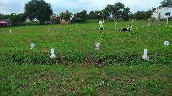 Residential Plot for Sale in Model Town, Ludhiana