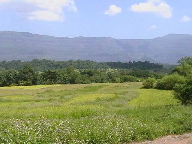 5 Acres R-zone Land Sale Khopoli Near Imagica Opp India Bulls Rs 4 Lac per Gunta