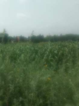 Agricultural/Farm Land for Sale in Sohna Road, Faridabad
