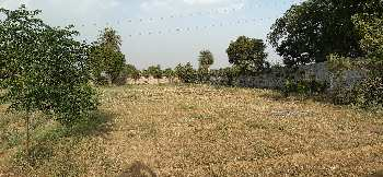 8 acre land for sale 11 feet wide road in near barsana