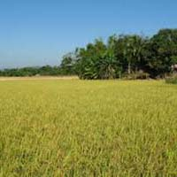 40 Bigha Agricultural Land for Sale@Ajmer