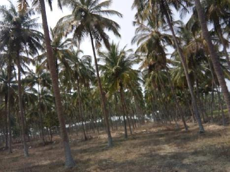 Agricultural/Farm Land for Sale in Palladam, Coimbatore