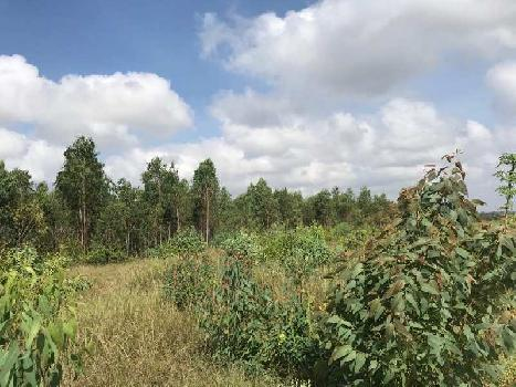 50 Acre Agricultural/Farm Land for Sale in Hoskote Malur Road, Bangalore