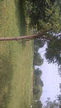 36 Guntha Agricultural/Farm Land for Sale in Tandur, Vikarabad