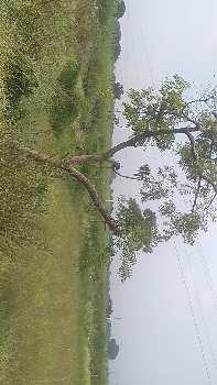 36 Guntha Agricultural/Farm Land for Sale in Tandur, Vikarabad