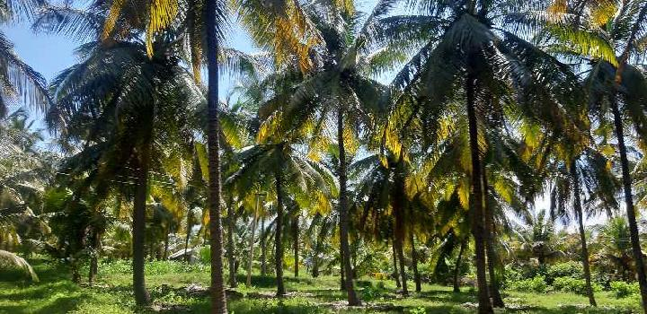 Agricultural/Farm Land for Sale in Pollachi, Coimbatore