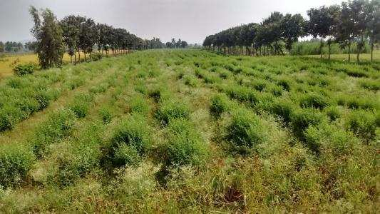 605 Sq. Yards Agricultural/Farm Land for Sale in Sangareddy, Hyderabad