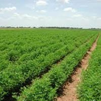 Farm Land for Sale in Roorkee