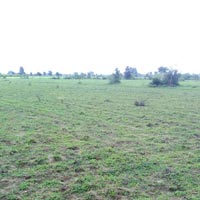 Farm Land for Sale in Haridwar