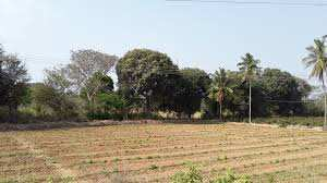 Agriculture Land