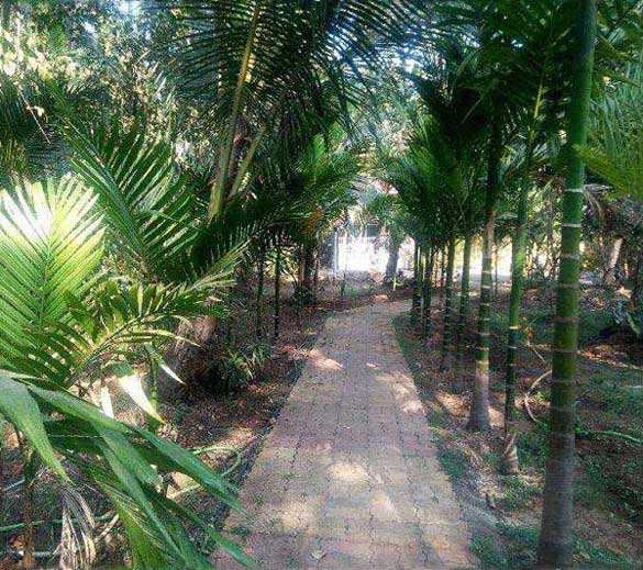 3 BHK Individual House for Rent in Alibag, Raigad