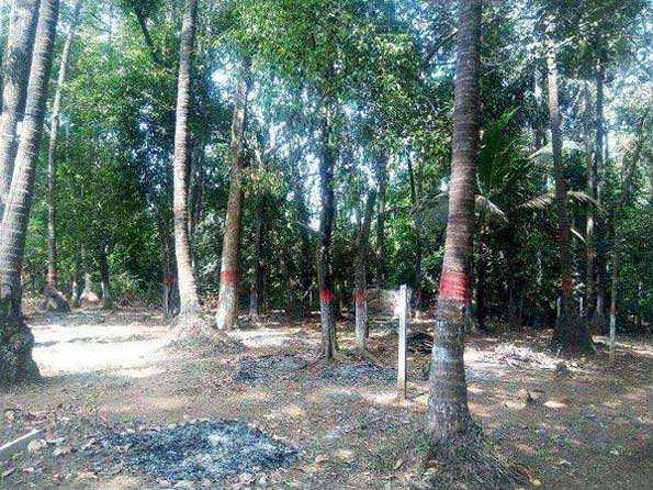 Farm Land for Sale in Alibag, Raigad