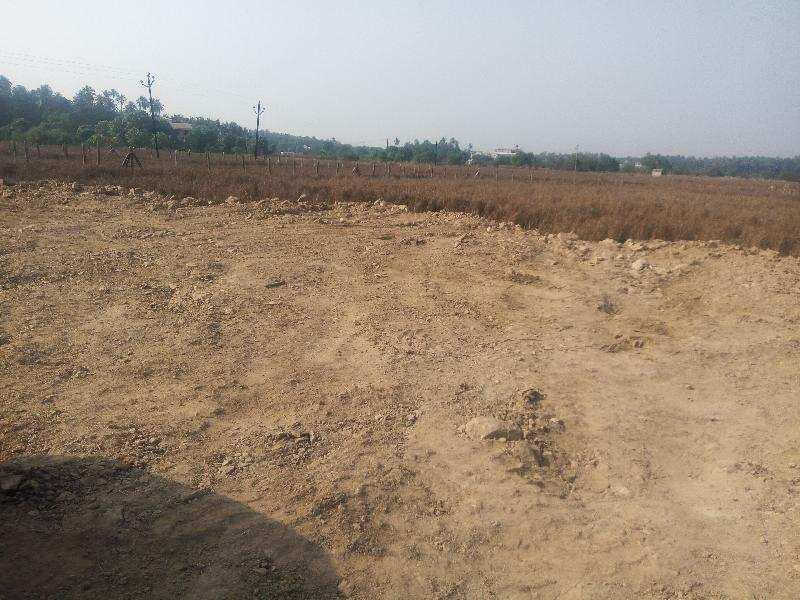 Agricultural/Farm Land for Sale in Alibag, Raigad