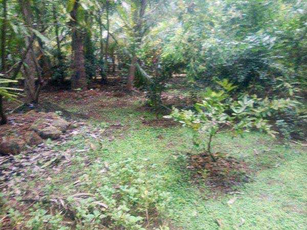 Agricultural/Farm Land for Sale in Alibag, Raigad