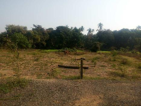 8000 sq.ft agriculture plot in alibag-nagaon.